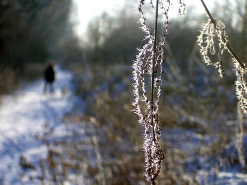 winter_2009_1